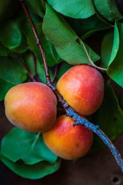 african mango ervaringen